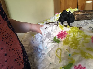 LX-animals-and-shaving-foam-provocation-3