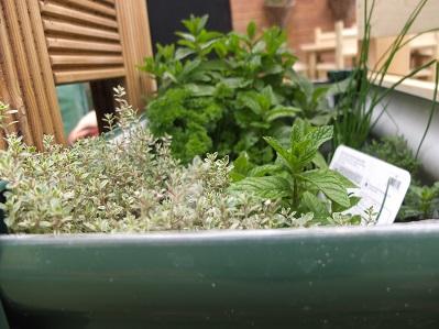 Garden-image-for-website-8