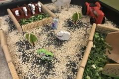 Farm-yard-cabbage-tuff-tray