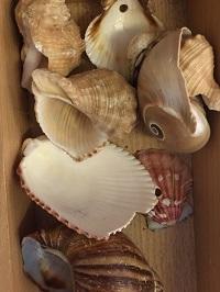Loose part shells